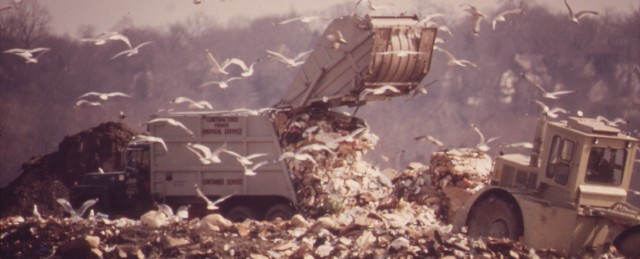 SEAGULLS_FEED_OFF_GARBAGE_AT_THE_DUMP_IN_HACKENSACK_MEADOWS._IN_TIME_THIS_LANDFILL_WILL_PROVIDE_RECREATION_FOR_THE..._-_NARA_-_549737